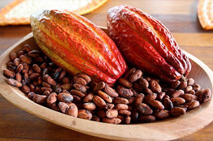 Hạt Cacao Khô Trên 80% Độ Lên Men
