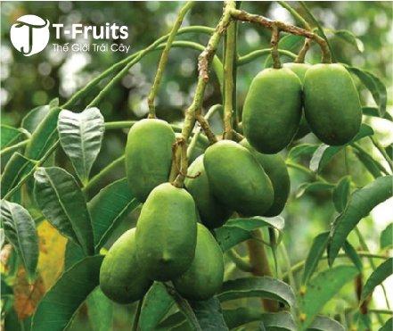 coc thai (14K/kg)